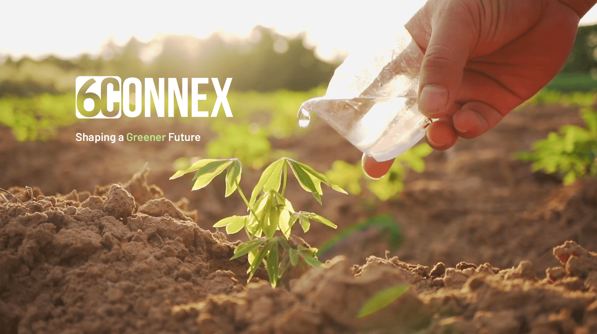 6connex sustainability person watering green plant in dirt